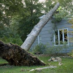 wind-damage-250x250